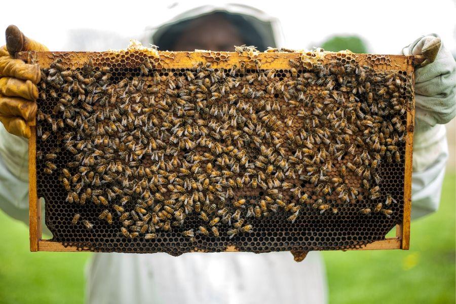 Ciężka praca pszczelarza
