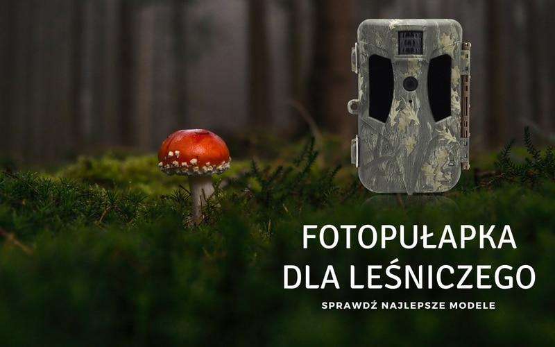 Fotopułapka dla leśniczego