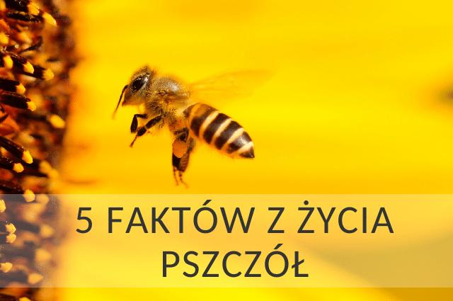 Kilka ciekawostek z życia pszczoły