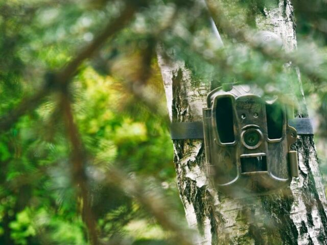monitoring domu za pomocą fotopułapki